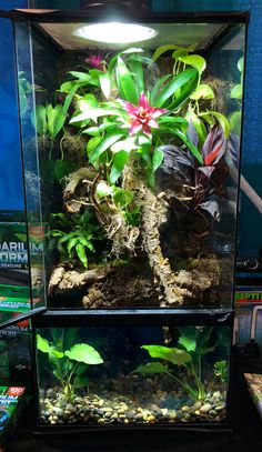 DIY Paludarium with aquarium on bottom and terrarium on top. Great for dart frogs, day geckos, cherry shrimp, and more!