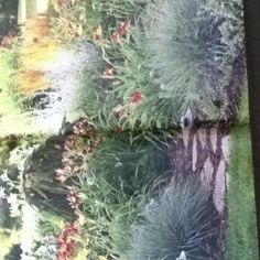 Plants names and arranging follis page72-73 bhg. Web site is an amazing encyclopedia of gardening tips
