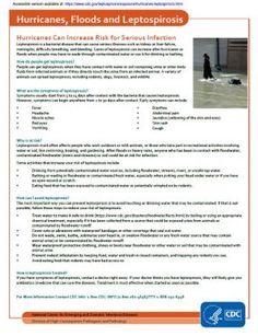Hurricanes and Leptospirosis fact sheet image