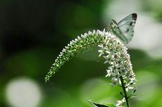 花と蝶 - Mannam & Daehwa(キリスト教福音宣教会)