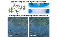 The material, which was inspired in part by the regenerative ability of the comic book antihero Wolverine, could someday be used to improve the lifespan of electronic devices or develop self-repairing robots.