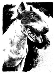 Bella Luna the #Bullterrier by B3NN3TT on @deviantART