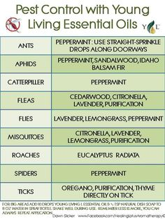 Young living pest control: essential oils to kill ants, roaches, ticks, flies, spiders, etc. (misspelled original!)