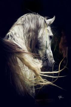 Welcome to my world of lovely things.Dreaming of heaven, dancing in a summer meadow with white horses. Beautiful Arabian Horses, Most Beautiful Horses, Majestic Horse, All The Pretty Horses, Animals Beautiful, Horse Photos, Horse Pictures, Equine Photography, Animal Photography