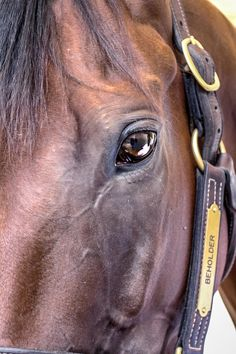 BEHOLDER - beauty in her eyes..