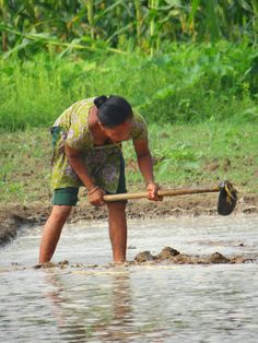 A woman working in a rice field near Chitwan National Park