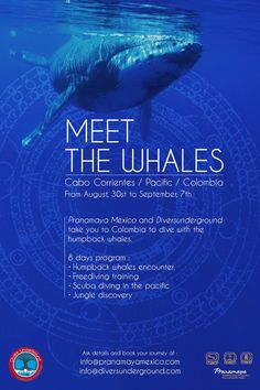 Humpback whales in Colombia's Pacific coast with Colombian Cave and Technical Diving Instructor Camilo Garcia. Technical Diving, Humpback Whale, Pacific Coast, Whales, Scuba Diving, Cabo, Places To Visit, Mexico, Journey