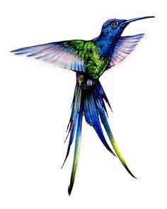 Watercolor Print, Long Tail Hummingbird, Nectar, Feather, Birds, Home Decoration, Blue, Orange, Garden, Decorative