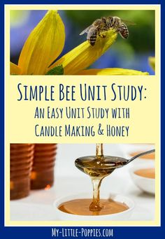 simple-bee-unit-study-with-candle-making-and-honey-my-little-poppies - Tiere - Gliederfüßer - Quick chicken recipes Science Fair, Science Lessons, Science Education, Teaching Science, Science Experiments, Science And Nature, Science News, Teaching Ideas, Bee Activities
