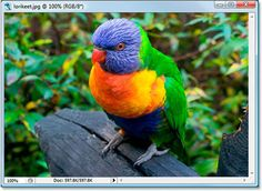 color-channels How to use photoshop