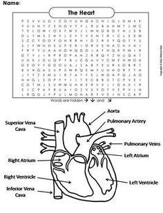 Circulatory system | Anatomy | Circulatory system ...