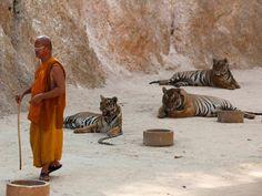 """""""O Grito do Bicho"""": Animais selvagens na Tailândia, lazer ou negócio?"""