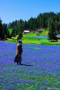 Trabzon yaylalarından…  Fotoğraflar: Yakup Ergenç