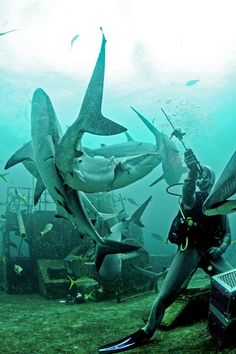 I love sharks they are soooo cute. One of my favourite animals. I believe totally in shark rights