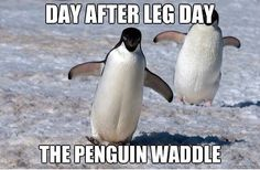 The penguin waddle quotes quote fitness workout motivation penguin exercise motivate fitness quote fitness quotes workout quote workout quotes exercise quotes leg day Leg Day Quotes, Leg Day Memes, Leg Day Humor, Gym Humour, Leg Day Funny, Exercise Humor, Exercise Quotes, Fitness Motivation, Fitness Quotes