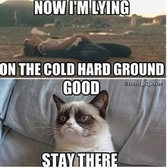 Grumpy Cat hates Taylor Swift...Who doesn't:)