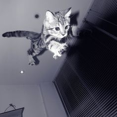 勇 氣 by 菠蘿麵包, via Flickr  More kitty stuff on www.thedailymew.com