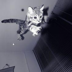 Fly kitty, fly.