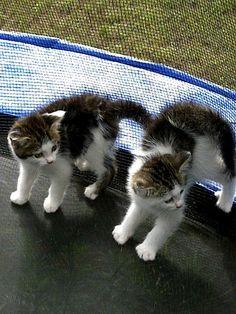 'Lieve help, wat is dit voor een raar bewegend ding?'
