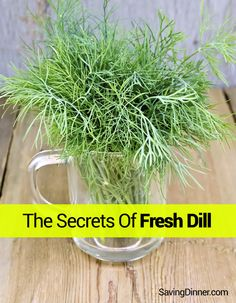 Dill is not only delicious but it's also a nutritional powerhouse! Learn the nutritional benefits that you can get in fresh dill plus tips how to store them. Dill Recipes, Veggie Recipes, Cooking Recipes, Fresh Dill, Fresh Herbs, Growing Dill From Seed, Dill Weed, Drying Herbs, Outdoor Gardens