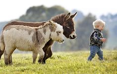 Miniature donkeys!