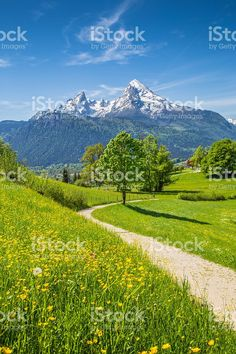 Idyllic summer landscape in the Alps with fresh green mountain pastures and snow-capped mountain tops in the background, Nationalpark Berchtesgadener Land, Bavaria, Germany. Wonderful Places, Beautiful Places, Beautiful Flowers, Foto Nature, Landscape Photography, Nature Photography, Green Mountain, Mountain View, Jolie Photo