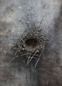"""Rr&co Nest 4 - 16""""x22.4"""" Paper Size Photography Institute, Art Photography, Weaver Bird Nest, Contemporary Baskets, Bird Art, Bird Feathers, Abstract, Drawings, Prints"""