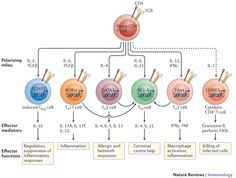 Expanding roles for CD4+ T cells in immunity to viruses