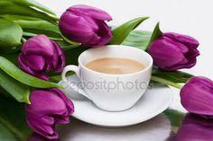 Violet tulpen Stockfoto's, Rechtenvrije Violet tulpen afbeeldingen | Depositphotos®