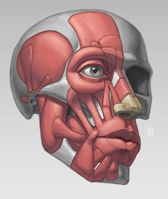 Anatomy Demos ★ || CHARACTER DESIGN REFERENCES™ (https://www.facebook.com/CharacterDesignReferences & https://www.pinterest.com/characterdesigh) • Love Character Design? Join the #CDChallenge (link→ https://www.facebook.com/groups/CharacterDesignChallenge) Share your unique vision of a theme, promote your art in a community of over 50.000 artists! || ★