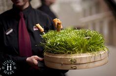 Food presentation - organic and fun