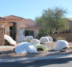 Ten tips on preventing damage to trees and plants in Phoenix when the temperatures are freezing and there is frost.