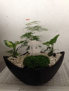 GCFSMex: de nuestro concepto natura...jardines con intención, significado, simbolismo. Concepto y diseño: Monica Koppel. Zamora 132, col. Condesa, Mex DF 52560199. Www.fengshui-monicakoppel.com.mx