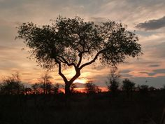 Kruger Park zonsopgang Sunrise, Celestial, Park, Places, Outdoor, Outdoors, Parks, Outdoor Games, The Great Outdoors