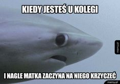 Skąd ja to znam? Wtf Funny, Funny Memes, Jokes, Polish Memes, Best Memes, Cool Pictures, Haha, I Am Awesome, Geek Stuff