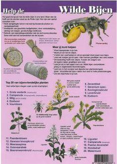 * Help de wilde bijen...