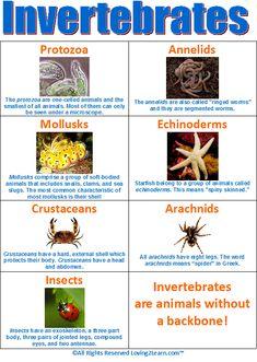 Invertebrates Chart  www.loving2learn.com