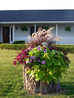 We have had a lot of trees cut down - what do I do with the stumps? | Hometalk