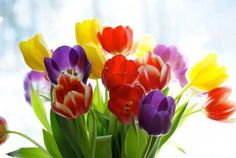 Colorful Spring flowers!