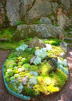 """Moss Garden #moss #garden I want to fill the koi pond with moss and make a """"fairy picnic"""" area for the girls. That way I don't have to worry about them falling in."""