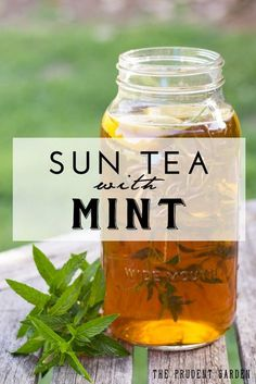 Beat the heat with a nice cold glass of sweet tea with mint. Harness solar energy by brewing sun tea. Sun tea with mint is the perfect summer drink!