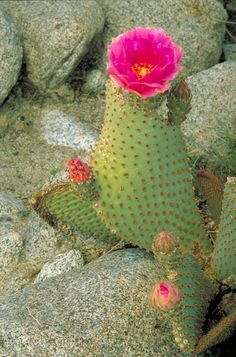 Cactus:)