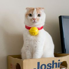 Another indignity at the hands of his humans... {Pokke} tee hee
