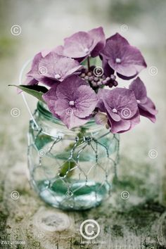 moderní fotografie - Hortenzie ve váze, Hydrangea Glass Vase, Sweet Home, Home Decor, Decoration Home, House Beautiful, Room Decor, Interior Decorating
