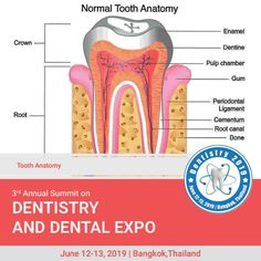Dentistry 2020 is on Mar 4 2020 at Auburn Medical Conferences, Tooth Enamel, Dental Care, Dentistry, Anatomy, Teeth, Health Care, Composition, Dental Caps
