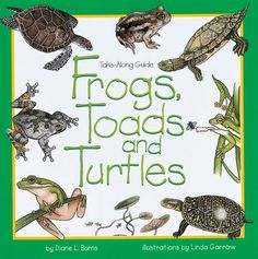 Frogs, Toads and Turtles Take Along Guide:  great for visits to nearby ponds, streams, and lakes. Colorful illustrations and useful tips help readers find and identify 30 different kinds of frogs, toads, and turtles. For each species, learn what it looks like, what it eats and where to find it. There are fascinating facts, fun activities, and scrapbook pages for notes or drawings.  Softcover, 48 pgs