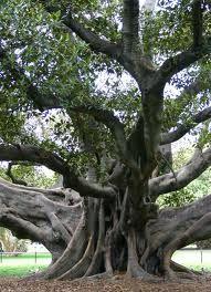 This is my tree. Strange I know.