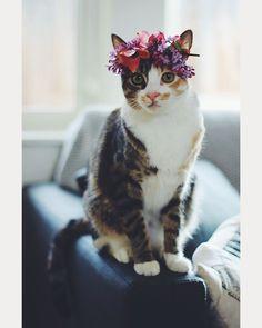 So Darn Cute Feline Flower Girl