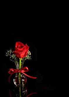 Galaxy Phone Wallpaper, Phone Wallpaper Design, Phone Wallpaper Images, Cute Wallpaper Backgrounds, Dark Wallpaper, Flower Backgrounds, Beautiful Flowers Pictures, Beautiful Flowers Wallpapers, Beautiful Rose Flowers