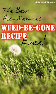 All-Natural Weed-Be-Gone Recipe 1 Gallon Vinegar. 2 cups Epsom salt. 1/4 c Dawn soap. .